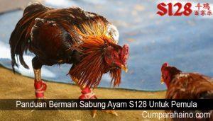 Panduan Bermain Sabung Ayam S128 Untuk Pemula
