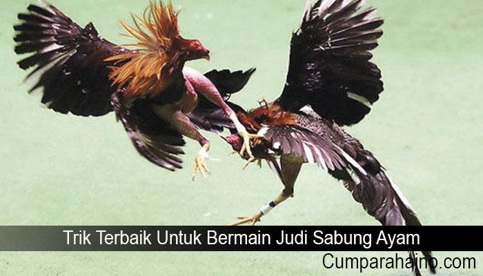Trik Terbaik Untuk Bermain Judi Sabung Ayam