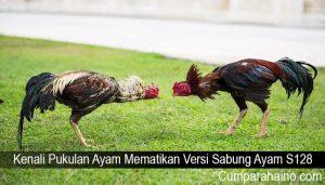 Kenali Pukulan Ayam Mematikan Versi Sabung Ayam S128